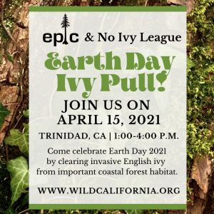 Join Us For An Earth Day Ivy Pull On April 15th!