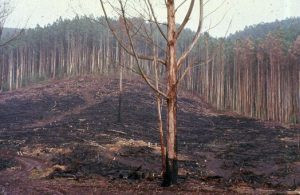 Stop the Salvage Logging of Post-Fire Forests