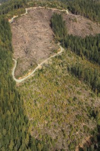 CAL FIRE and Water Board to Approve Green Diamond Clearcuts in Elk River