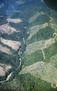 Gualala clearcut found on krisweb.com