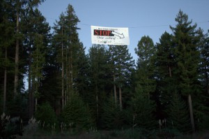 Action Alert! Tell Green Diamond: No Clearcuts in Elk River