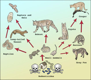 New Rodenticide Law – A Win For Wildlife