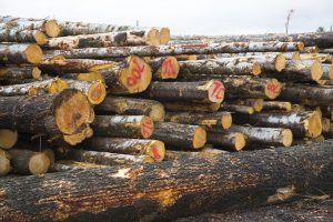 Lumber Prices Are Product Of COVID, Not Environmental Protections