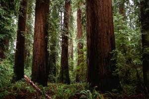 RGintheforest