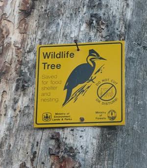 EPIC forces SPI to eliminate logging poised to harm owls