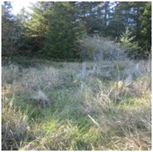 Photo 3 & 4. Two of the only small breaks and corridors in Alexandre fence at Yontocket, limiting and concentrating elk movement in the park.