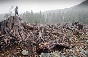 Push for More Logging Under the Northwest Forest Plan