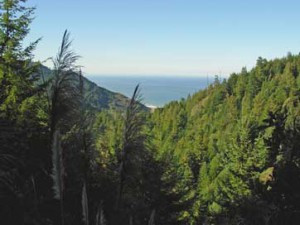 Support the Usal Redwood Forest Conservation Easement Project