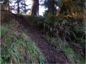 Photo 5.  Treacherous corridor for elk to enter the forest in TDSP lands north of Silva Rd. Notice the rust and forgotten barbwire by a public trail.