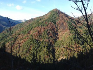 Take Action! Protest Destructive Post-Fire Logging on the Salmon River