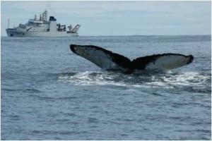 whale ship noaa
