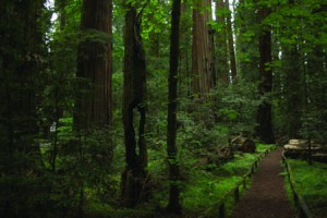 Statewide Richardson Grove Campaign Gains Momentum