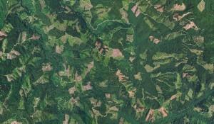 Trinidad Community Forum: Green Diamond and Industrial Logging