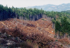 Green Diamond's Holiday Gift to Headwaters: Clearcuts, Roads and Herbicides