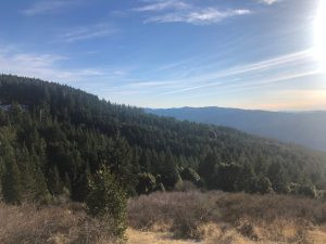 Action Alert: Help Stop Massive Logging and Herbicide Project in Trinity County