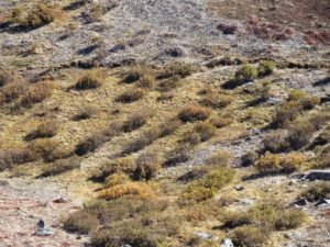 Decades of unmanaged grazing have degraded, fragmented and dried out headwater willow wetlands