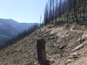 Clearcut logging in the Westside Timber Sale