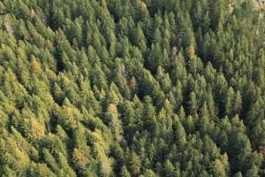 Eye On Green Diamond:Current Logging in Maple Creek Watershed