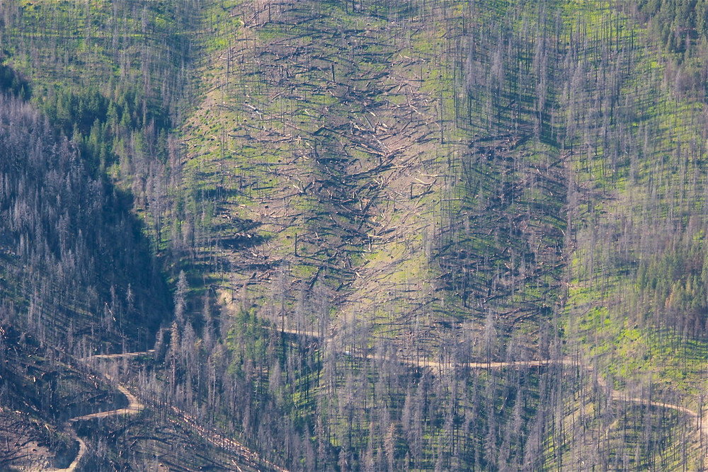 Westside implementation on steep and unstable slopes with small trees left behind. Photo courtesy of KS Wild.