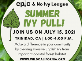 Join Us For A Summer Ivy Pull On July 15th!