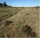 Photo 7. Overgrazing sign in CDFW parcel (adjacent to TDSP lands).
