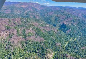Action Alert: Help Protect Wildlife, Water Quality and Fisheries in August Fire Area