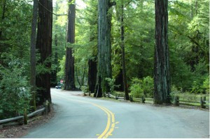 Opponents of Richardson Grove Highway Project File Second Suit to Save Old-growth Redwoods