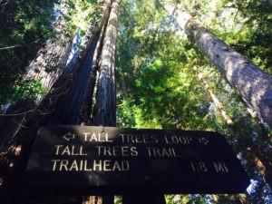 tall-trees-trail-rd