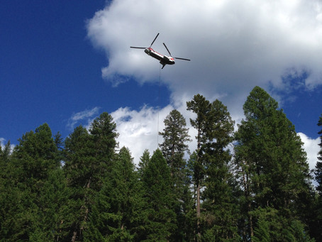 Nesting Eagles Harassed with Helicopter Logging