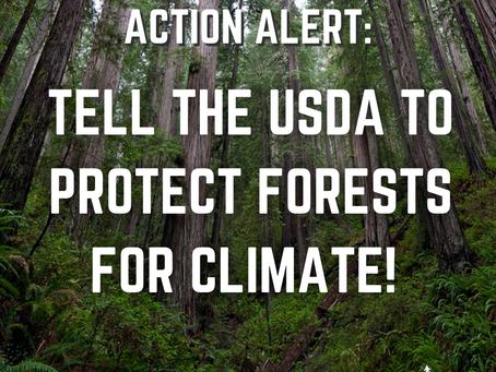 Action Alert: Protect Forests for Earth Day 🌎