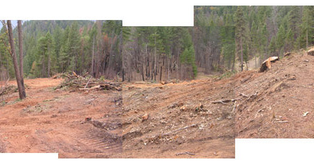 SPI Destroys Owl Habitat in Trinity County