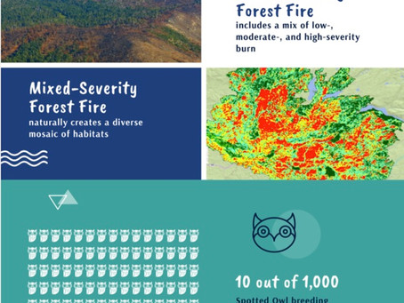 Logging, Not Wildfires is a Greater Threat to Northern Spotted Owls
