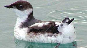 Action Alert: Endangered Species Deserve More Time and More Protections on the Mendocino Coast