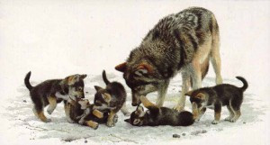 Lassen Pack Has Two Litters of Pups