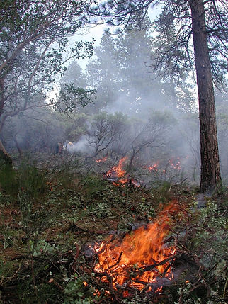 fires-for-fuels-768x1024.jpg