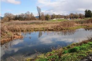 Winter Willits Wetland