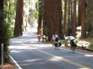 richardson_grove_bikes