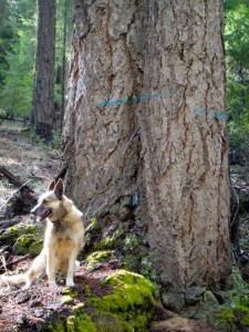 Old Growth, Climate Change and Connectivity