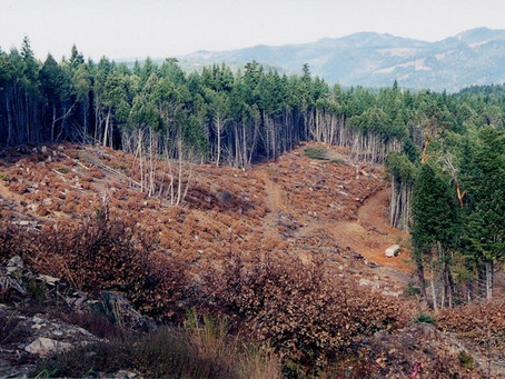 Forest Products Marketing Firm Commits Major Blunder in the Redwoods