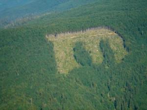 Information Vacuum: Green Diamond in Maple Creek Part 2