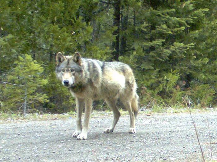 lone-wolf-or7-portland-mate-01_79908_990x742
