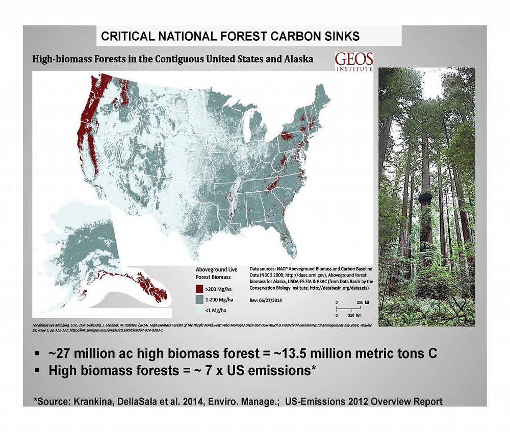 Critical National Forest Carbon Sinks