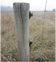 Photo 2.  Alexandre Dairy electric wire fastening, Yontocket Slough.