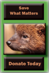 donate-button-save-what-matters-fisher