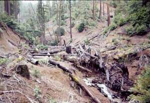 Stanley Creek in 1979, note people in the middle of the photo.
