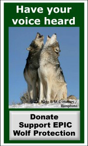 Howl for the Wolves at October 2nd Federal Hearing in Sacramento