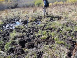 bigmdws_cattle-trail-in-wetlands-2