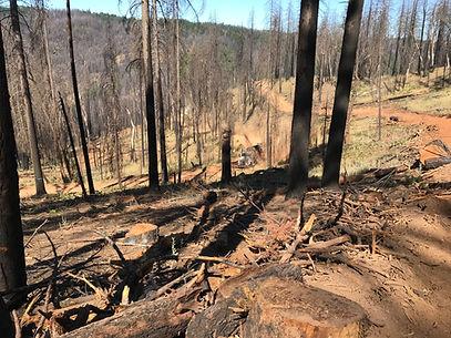 Mendocino Natl Forest Roadside Logging 2