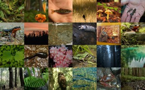 NW Ca Biodiversity 2reduced