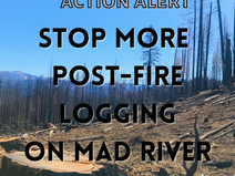 Action Alert: Stop More Post-Fire Logging On Mad River!